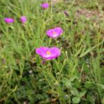 <b>野花はともだち</b>