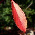 <b>一枚の葉っぱ</b>